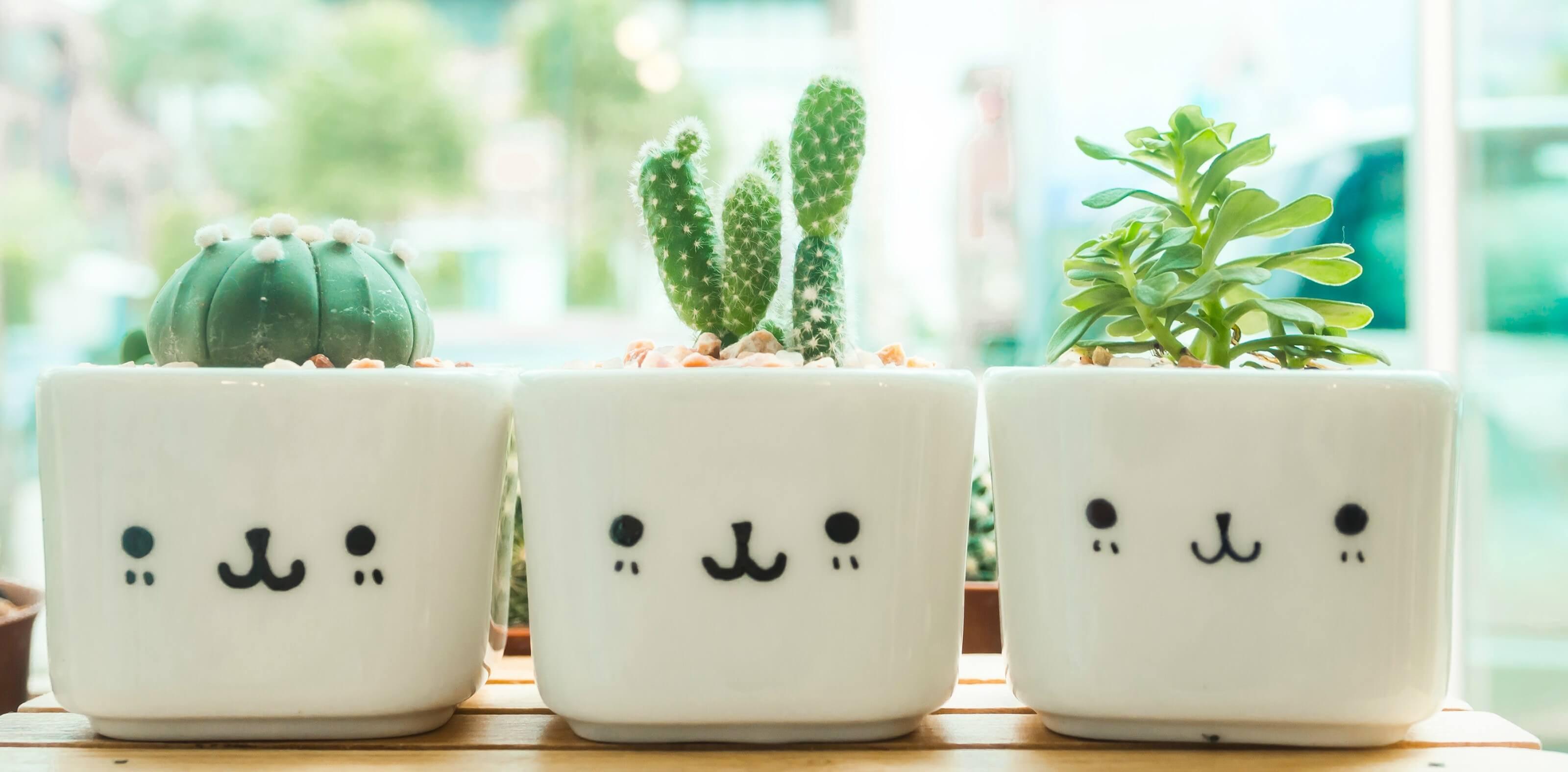 Diy Window Boxes 5 Inspiring Indoor Window Box Ideas To Brighten An Room