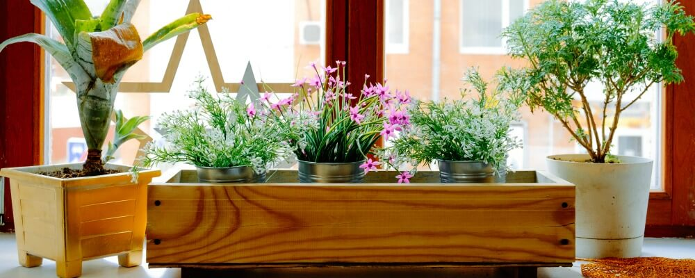 5 Inspiring Indoor Window Box Ideas To Brighten An Room
